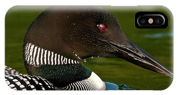 Common Loon IPhone Case