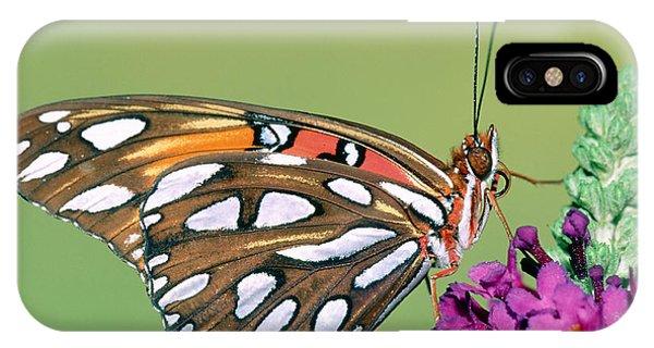 Agraulis Vanillae iPhone Case - Gulf Fritillary Butterfly by Millard H. Sharp