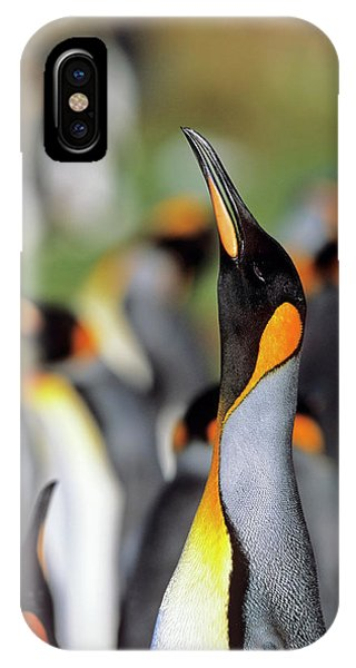 Adapted iPhone Case - King Penguin (aptenodytes Patagonica by Martin Zwick