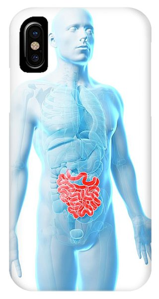 Male Intestine Phone Case by Sebastian Kaulitzki