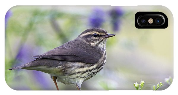Northern Waterthrush IPhone Case