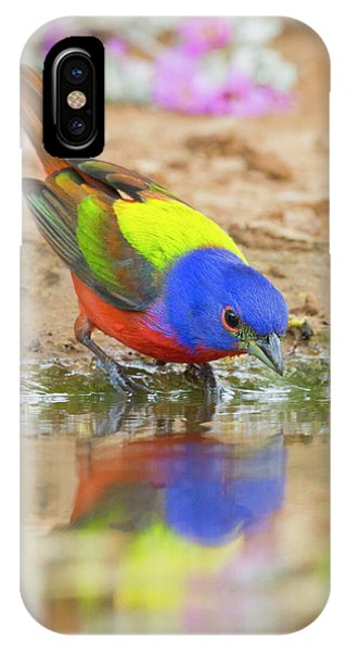Bunting iPhone Case - Painted Bunting (passerina Ciris by Larry Ditto