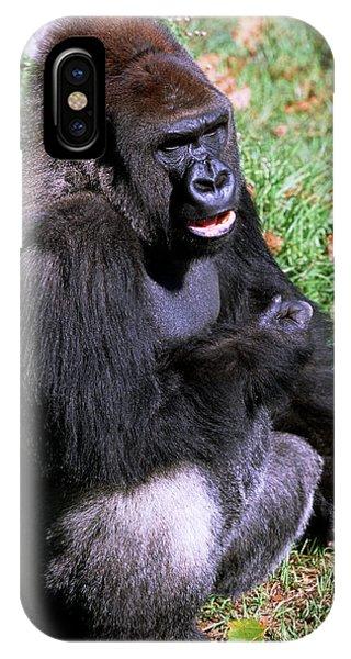 Silverback Western Lowland Gorilla IPhone Case