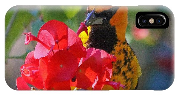 Spot-breasted Oriole IPhone Case