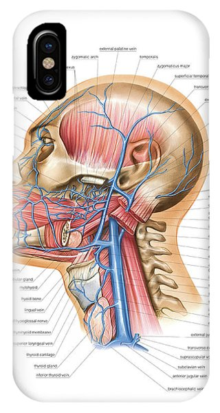Venous System Of The Head And Neck Phone Case by Asklepios Medical Atlas