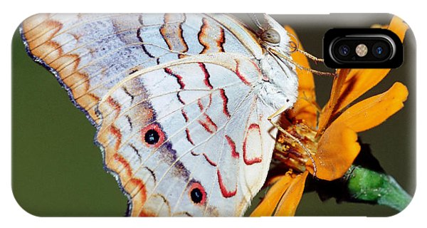 Pterygota iPhone Case - White Peacock Butterfly by Millard H Sharp