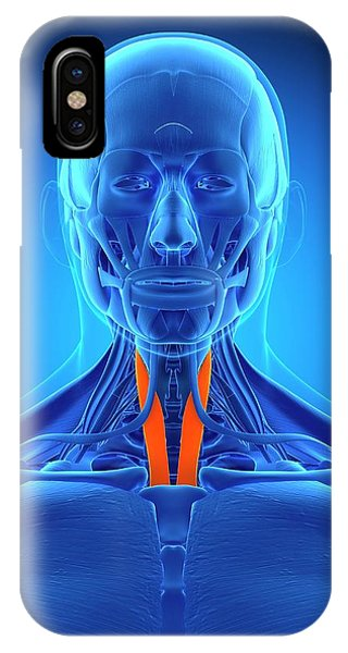 Neck Muscles Phone Case by Sebastian Kaulitzki/science Photo Library