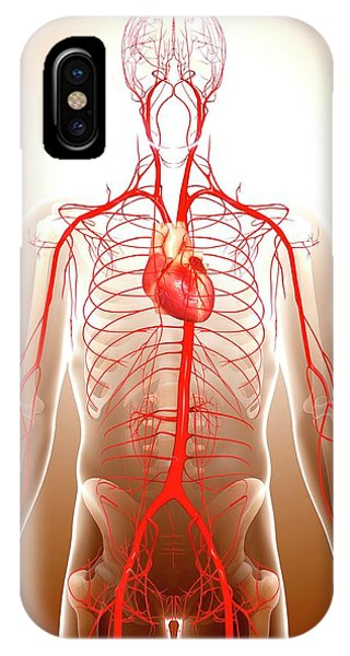 Cardiovascular System Phone Case by Pixologicstudio/science Photo Library