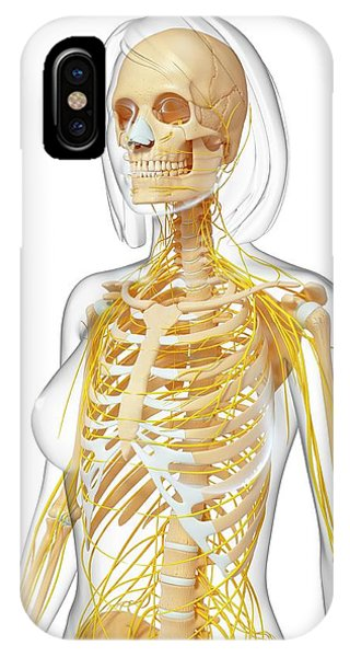 Female Anatomy Phone Case by Pixologicstudio/science Photo Library