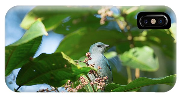 iPhone Case - A Azure-shouldered Tanager On A Branch by Alex Saberi
