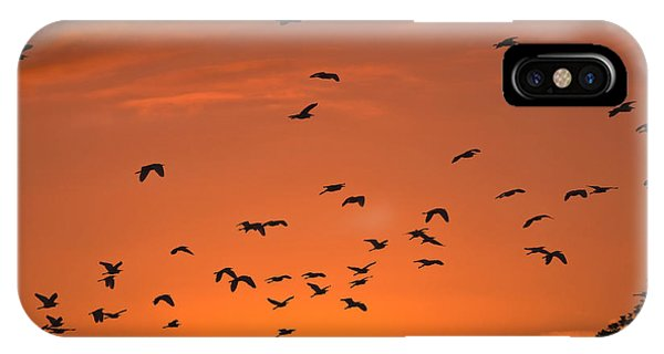 Birds At Sunset IPhone Case