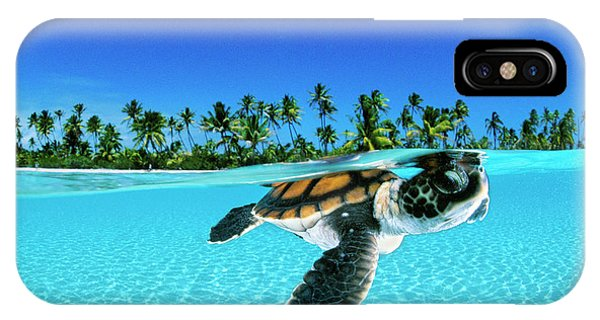 Water iPhone Case - A Baby Green Sea Turtle Swimming by David Doubilet