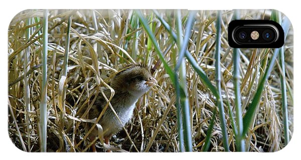 Little Things iPhone Case - A Baby Quail by Jeff Swan