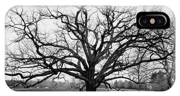 A Bare Oak Tree IPhone Case