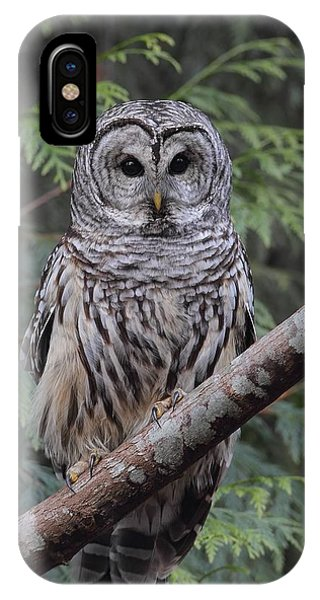 A Barred Owl IPhone Case