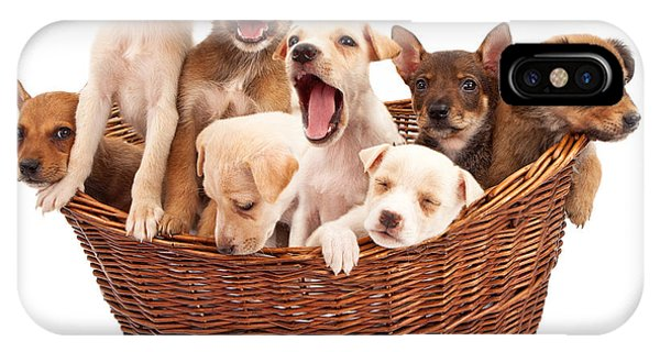 A Basket Of Puppies  IPhone Case