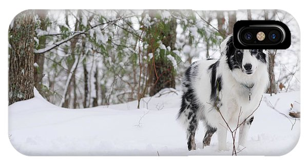 iPhone Case - A Black And White Australian Shepherd by Al Petteway & Amy White