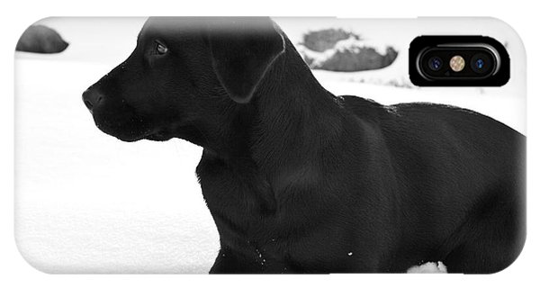 Cold Day iPhone Case - A Black Labrador Retriever Puppy Plays by Jose Azel