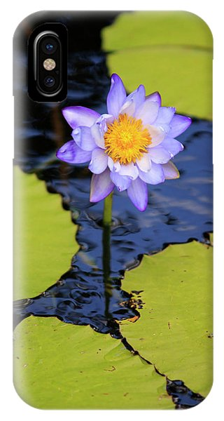 Far North Queensland iPhone Case - A Bright Purple Water Lily by Paul Dymond