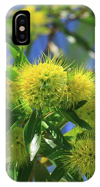 Far North Queensland iPhone Case - A Bright Yellow Wattle Tree In Suburban by Paul Dymond