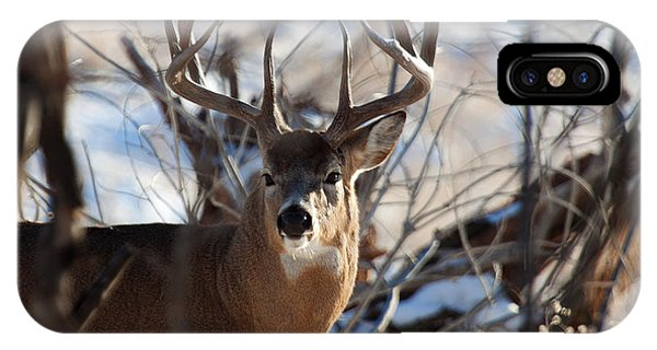 A Buck In The Bush IPhone Case