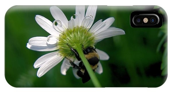 Little Things iPhone Case - A Bumble On The Wrong Side by Jeff Swan