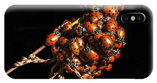 A Bunch Of Ladybugs IPhone Case