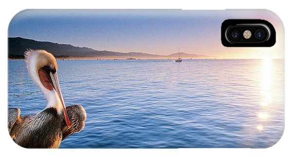 Barbara Steele iPhone Case - A California Brown Pelican Perches by Kevin Steele