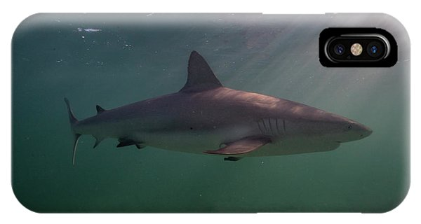iPhone Case - A Carribbean Reef Shark Swims by Andy Mann
