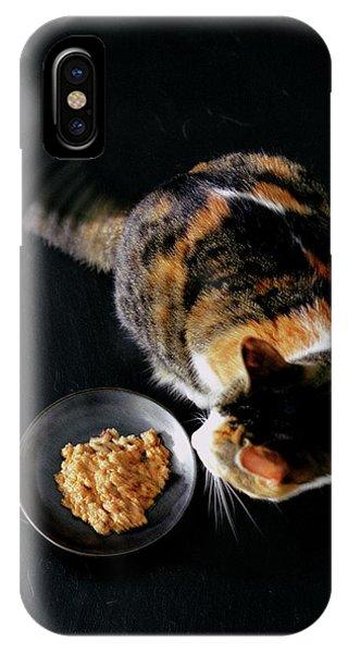 A Cat Beside A Dish Of Cat Food IPhone Case