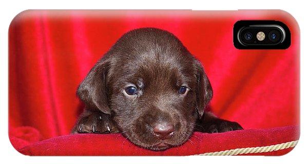 A Chocolate Labrador Retriever Puppy IPhone Case