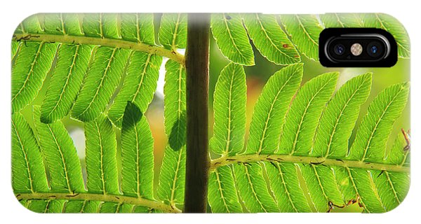 Far North Queensland iPhone Case - A Close-up Detail Of A Fern by Paul Dymond