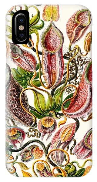 Adapted iPhone Case - A Collection Of Nepenthaceae by Ernst Haeckel