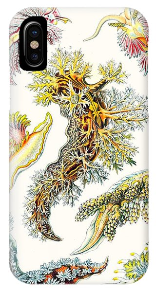 Vibrant iPhone Case - A Collection Of Nudibranchia by Ernst Haeckel