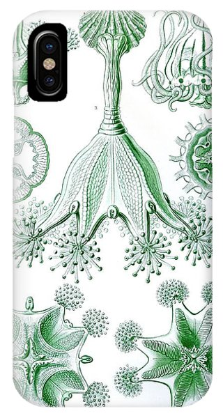 Organic iPhone Case - A Collection Of Stauromedusae by Ernst Haeckel