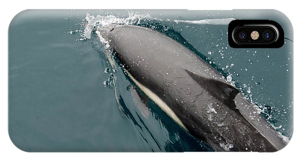 Barbara Steele iPhone Case - A Common Dolphin Off The Coast Of Santa by Kevin Steele