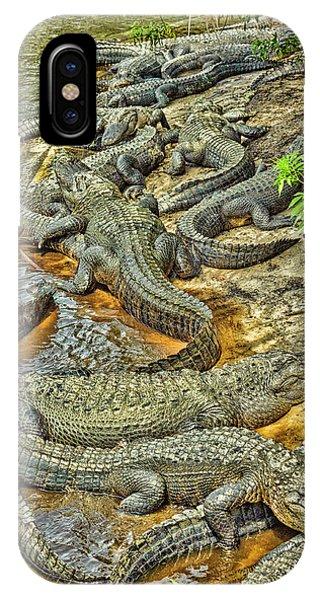 A Congregation Of Alligators IPhone Case