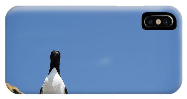 Razorbill iPhone Case - A Curious Bird by Anne Gilbert