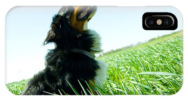 A Cute Dog On The Field IPhone Case
