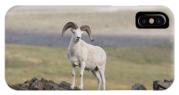 A Dall Sheep Ram Poses On Marmot Rock Phone Case by Hugh Rose