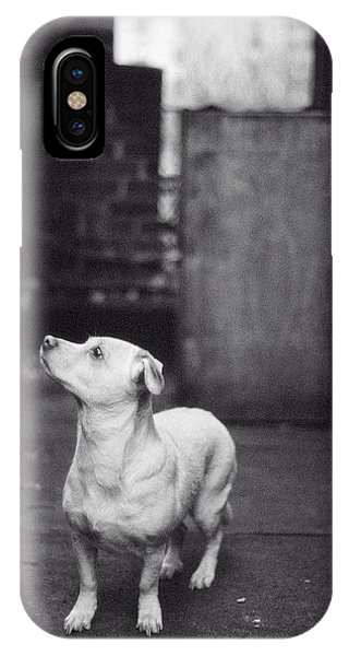 IPhone Case featuring the photograph A Dog On The Roof In New York City by Carol Whaley Addassi