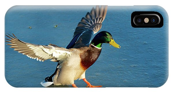 Anas Platyrhynchos iPhone Case - A Drake Lands On An Icy Pond by Richard Wright