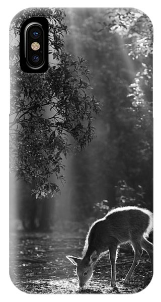 Asia iPhone Case - A Fawn In The Forest by Yoshinori Matsui
