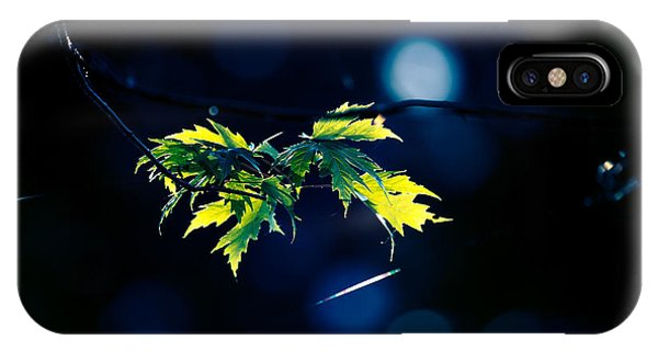 Leave iPhone Case - A Few Leaves In The Sun by Bob Orsillo