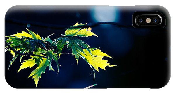 Leave iPhone Case - A Few Leaves In The Sun Two by Bob Orsillo