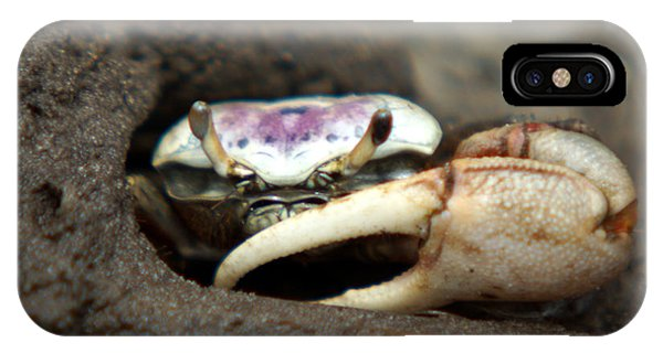 A Fiddler Crab Around Hilton Head Island IPhone Case