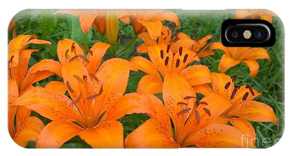 A Garden Full Of Lilies IPhone Case
