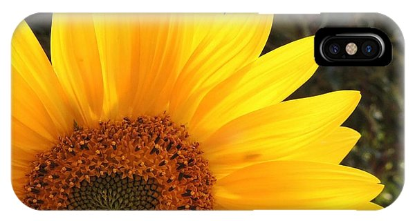iPhone Case - A Good Start To The Day by Stephanie Callsen