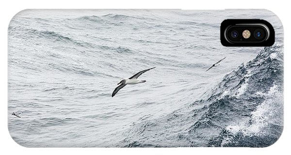 Albatross iPhone Case - A Grey Headed Albatross by Ashley Cooper