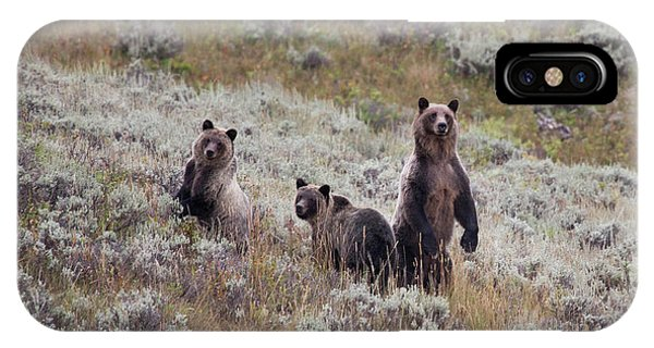 iPhone Case - A Grizzly Bear With Its Two Cubs by Ben Horton